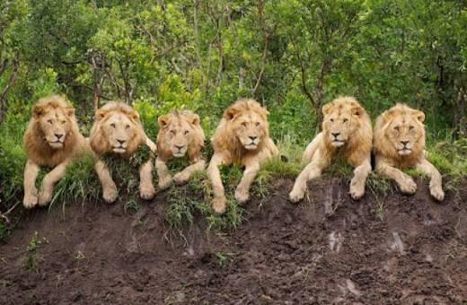 AFRIQUE DU SUD - Combiné Johannesburg - Sun City - Park Kruger
