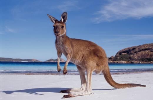 Combiné Melbourne - Sydney