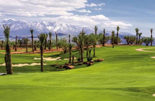 Royal Palm Golf