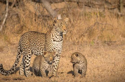 Londolozi Game Reserve